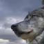 Eugenewolf507